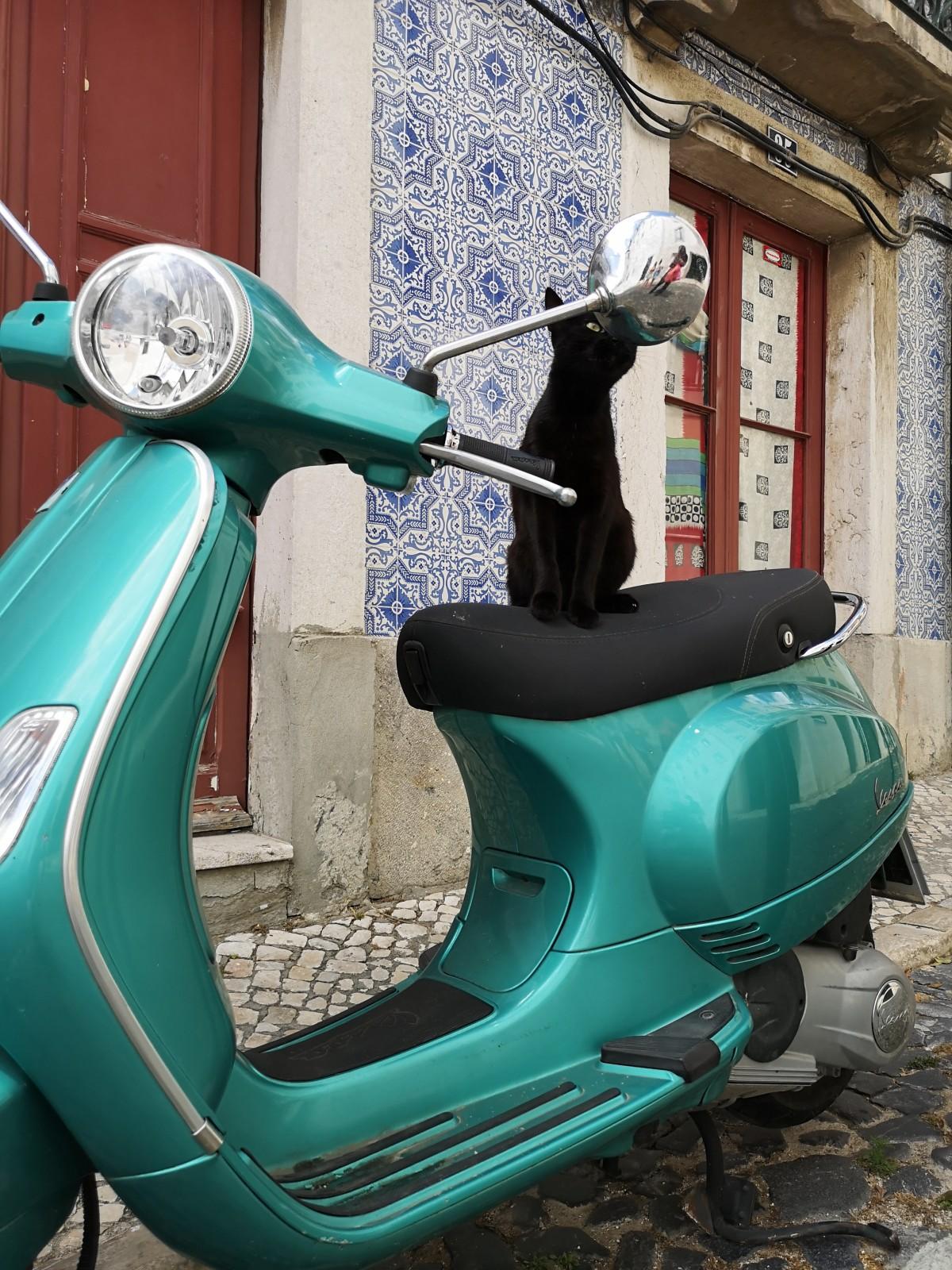 Lizbonska mačka.
